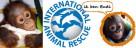 budi, orangutan, international animal rescue